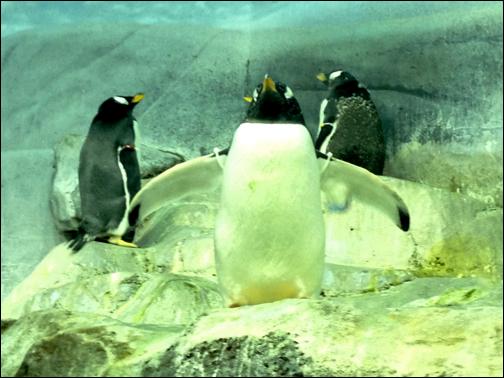 Ogg the Penguin