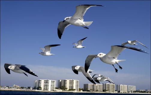 Crazy Seagulls